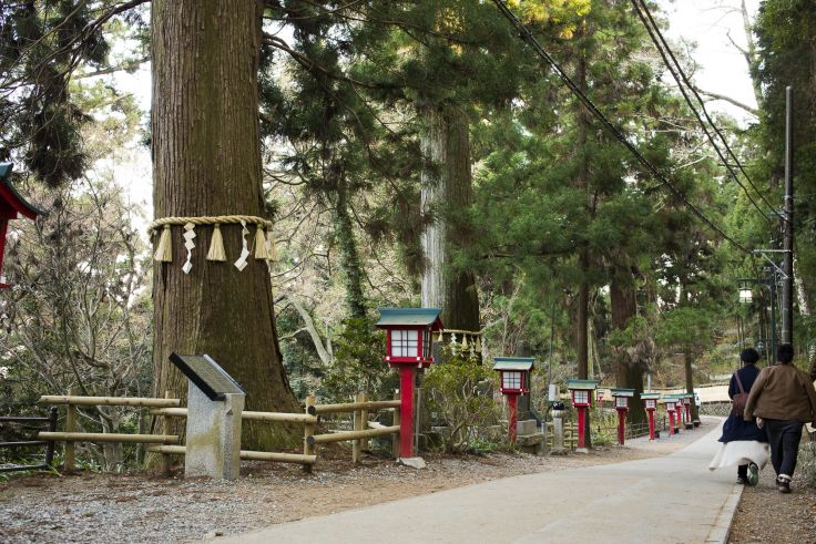 樹齢700年の大木を見あげる